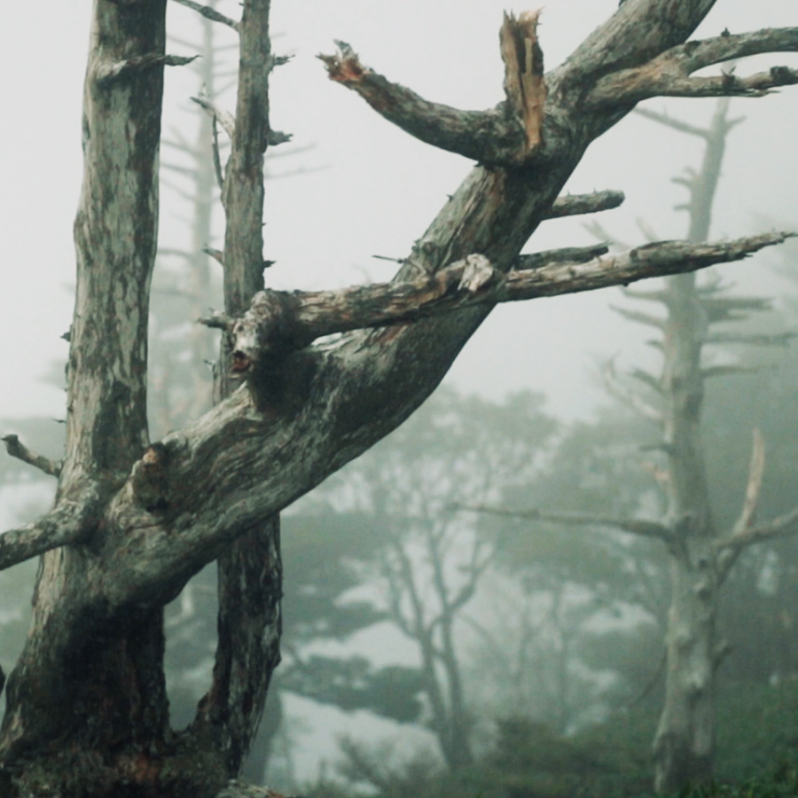 映画の中の写真。「デルス・ウザーラ」