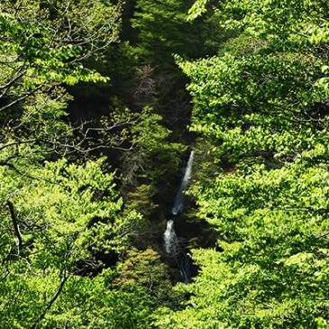 大空滝と宮沢賢治。EOS M5でスナップムービー。
