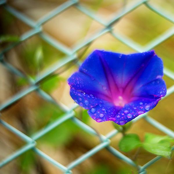 雨の日はアンジェニュー。そして、開放。